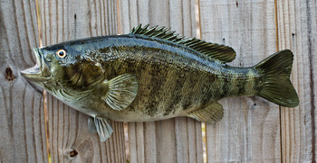 Smallmouth Bass replica