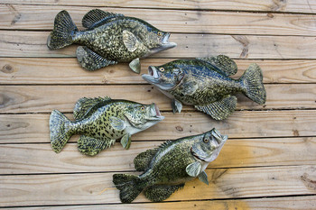 All sizes of Crappie available.