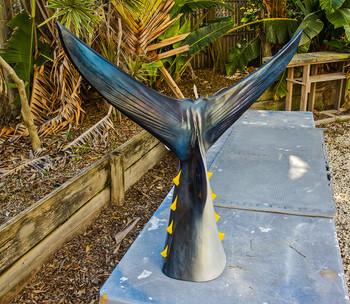 Bluefin tuna tail fiberglass replica
