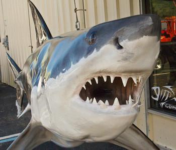 Great White Shark 146