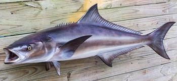Cobia fiberglass fish replica