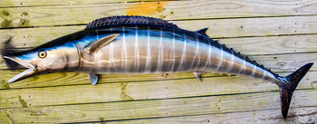 Wahoo fiberglass fish replica