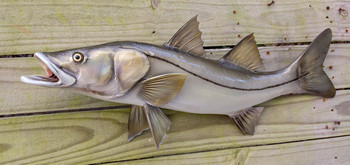 Snook fiberglass fish replica