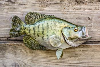 Crappie fiberglass fish replica