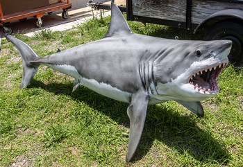Great White Shark fiberglass fish replica