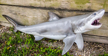 Great White Shark fiberglass replica