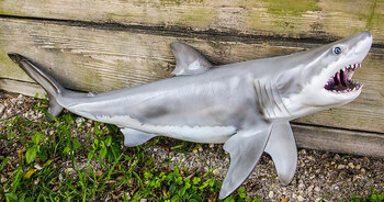 Great White Shark fiberglass replica