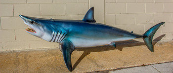 Mako Shark fiberglass fish replica