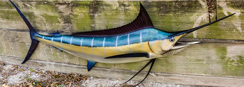 Blue Marlin fiberglass fish replica