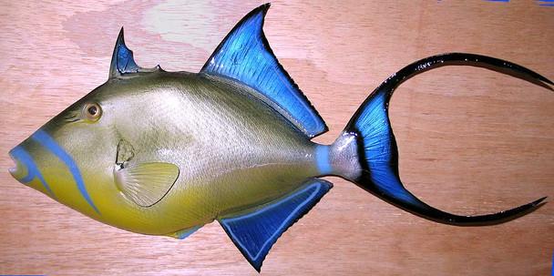Queen Triggerfish fiberglass fish replica
