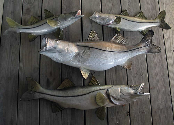 Many Sizes Available - Snook