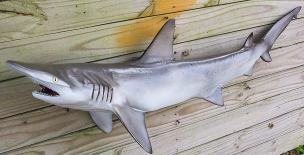 Bonnethead Shark fibreglass fish replica