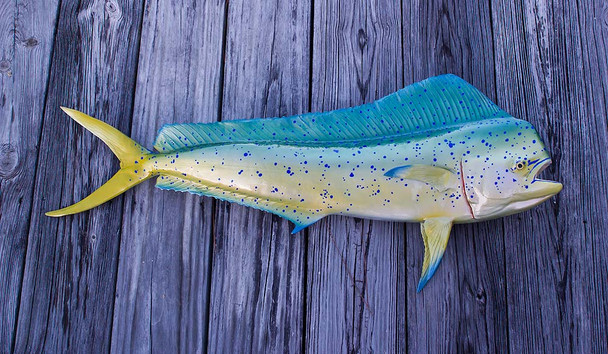 Mahi Mahi 41 inch Full Mount fiberglass fish replica