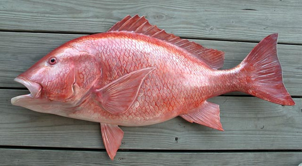 Snapper Red 36 inch half mount fiberglass fish replica