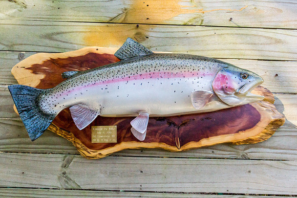 Rainbow trout on Cedar slab