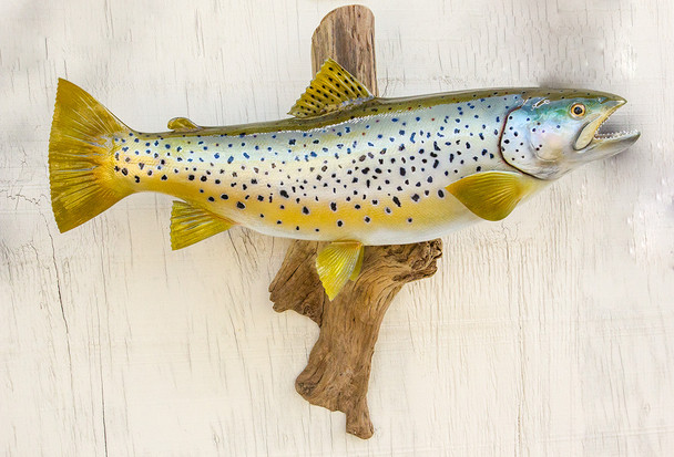 20 Brown Trout on Driftwood