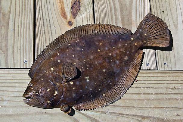 Flounder fiberglas fish replica