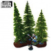 3x Mature Fir Trees