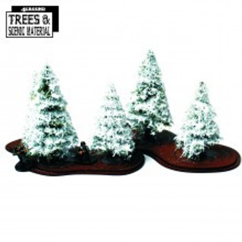 5x Young Winter Firs