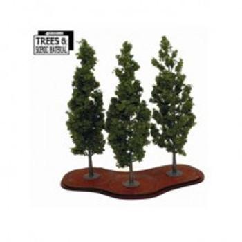 3x Mature Poplars