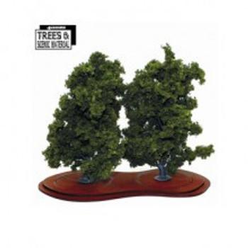2x Mature Ash Trees