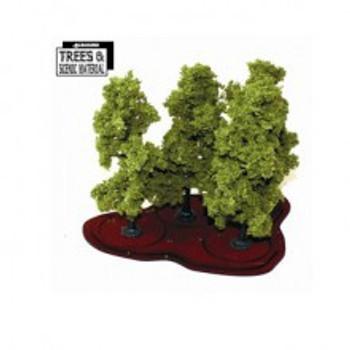 4x Young Oak/Beech Trees