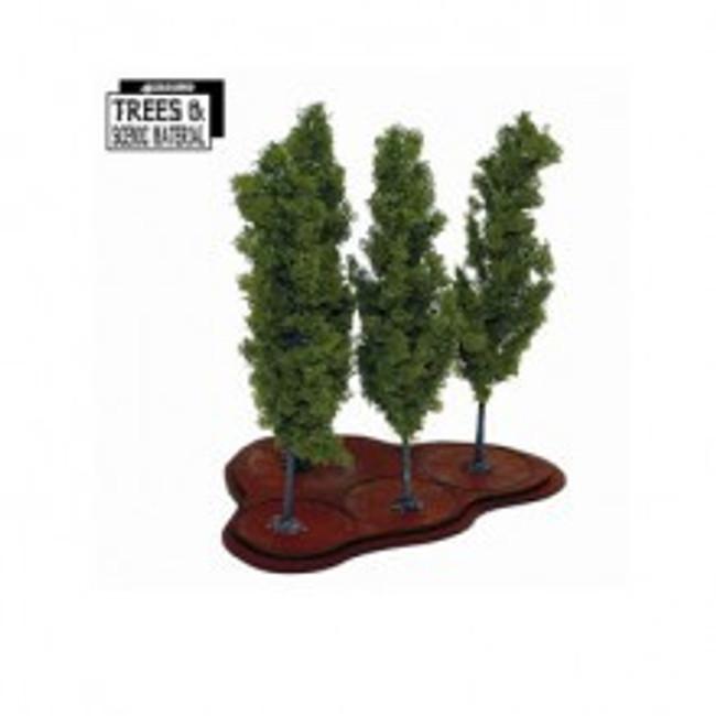 4x Young Poplars