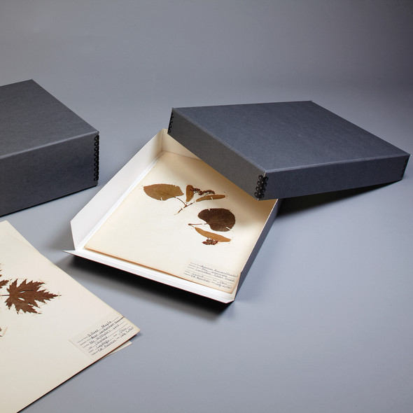 Herbarium Boxes - Drop Front