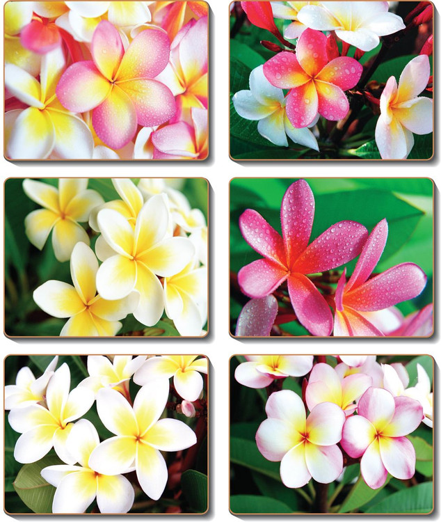 Frangipani Garden Coasters
