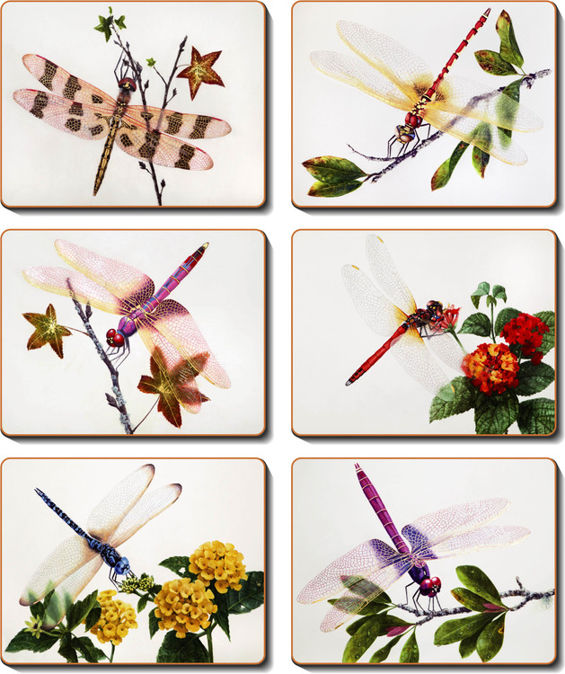 Delicate Wings Coasters