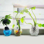 Gardening With Water Beads