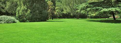 Want Your Lawn to Look Like This?