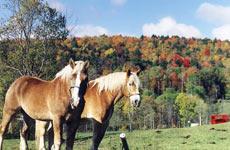 visitfarm-horses.jpg