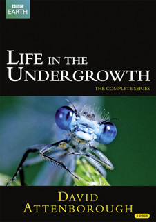 David Attenborough: Life in the Undergrowth - The Complete Seires (2005) (Normal) [DVD]