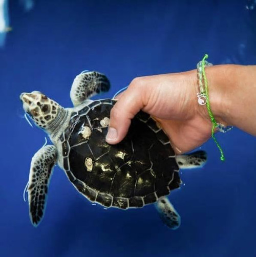 4Ocean Bracelet - Sea Turtle