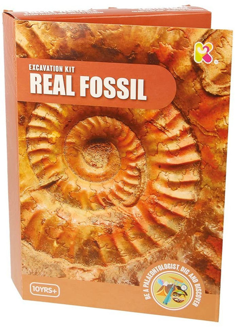 251fossil