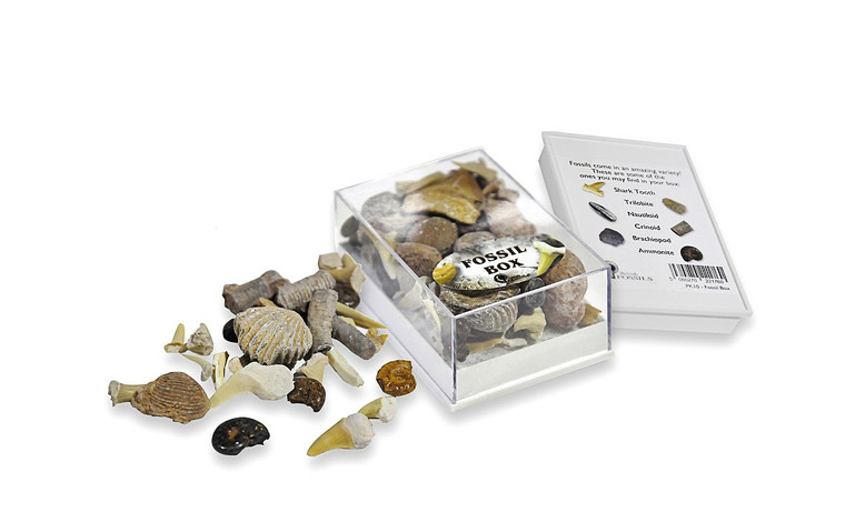 Fossil Collector's Box
