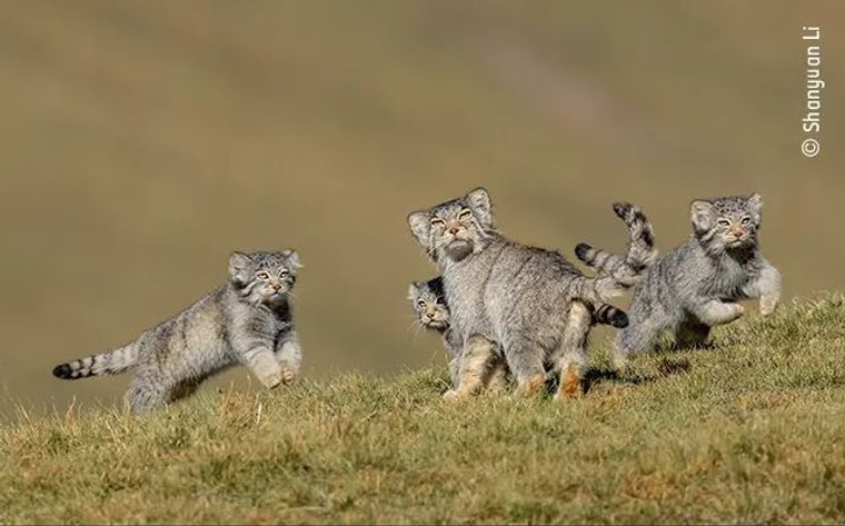 Print - Wildlife Photographer of the Year 2020 - When Mother Says Run (6622)