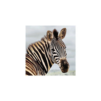 Amazing 3D Effect Holographic Greeting Card - Up Close - Zebra