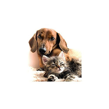 Carte Blanche 3D Holographic Card - Up Close - Cat and Dog Together