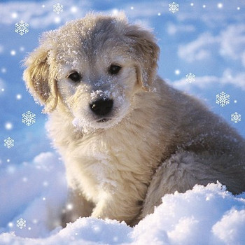 3D Holographic Up Close PUPPY IN SNOW Christmas Greeting Card