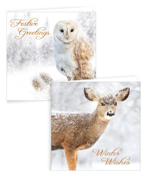 Pack of 10 Square Photograph Stag and Owl Designs Christmas Cards