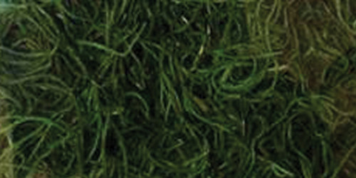 Quality Growers Preserved Spanish Moss 108.5 Cubic Inches-Apple Green -QG1542