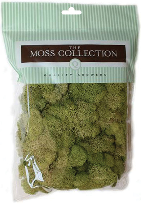 Quality Growers Preserved Reindeer Moss 108.5 Cubic Inches-Spring Green -QG2060 - 740657070338
