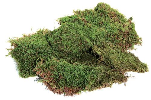 Super Moss Preserved Sheet Moss 2oz-Green -FS21550