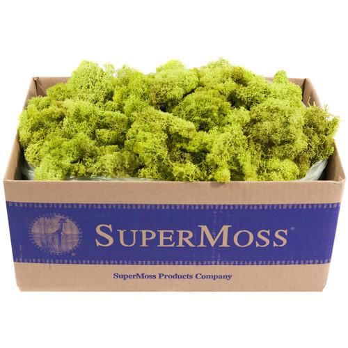 Super Moss Preserved Reindeer Moss 3lb-Chartreuse -RM3LB-21773