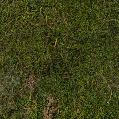 Super Moss Perserved Sheet Moss 8oz-21512
