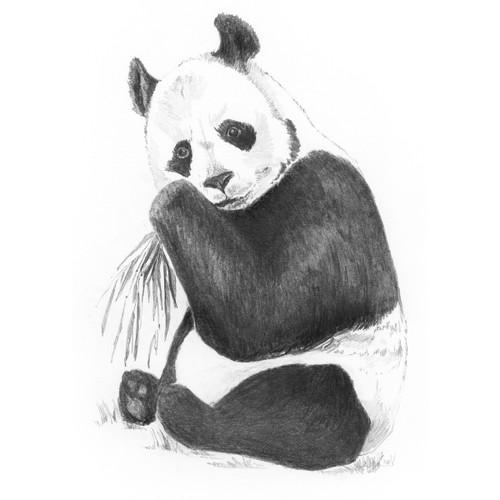 """Sketching Made Easy Kit 5""""X7""""-Panda -SKMIN-107 - 090672944153"""
