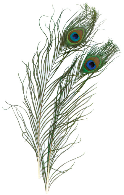 Peacock Eye Feathers 2/Pkg -Natural -B452