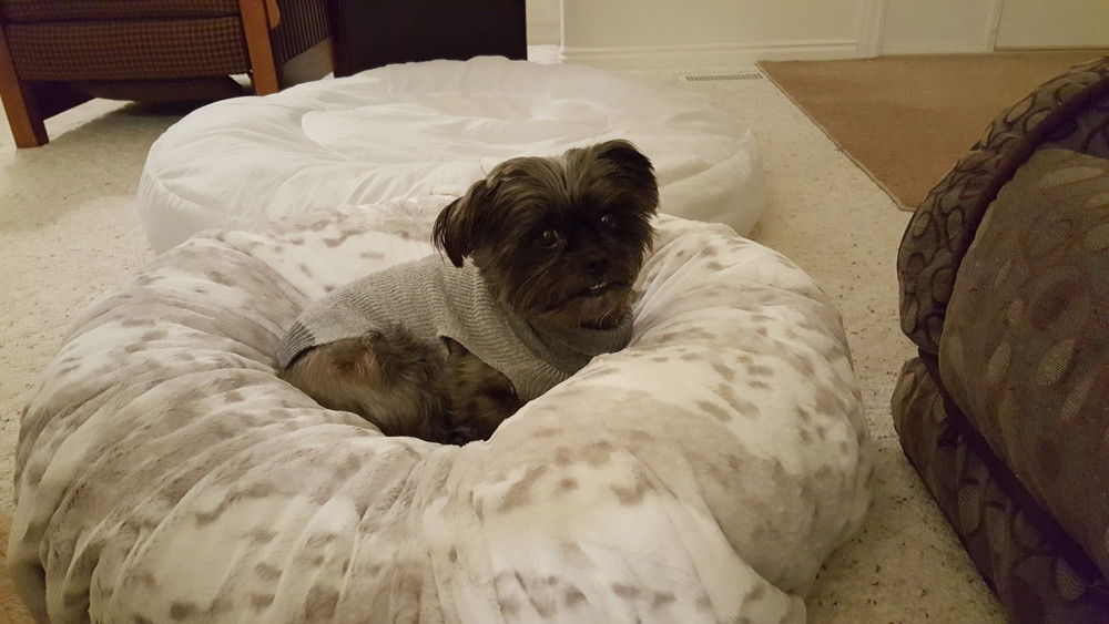 """Beverly is testing the 40"""" SNOW LEOPARD Bed cover.  """"Yep, it fits."""" This cover is on a sqaure 16"""" Bed."""
